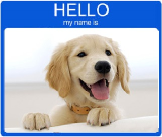 boy golden retriever names best golden retriever names for 2017 male and female dogs 3720