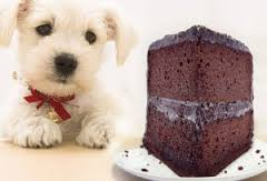 My Dog Ate Chocolate. What should I do?