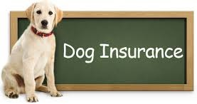 Dog Insurance : Does Your Dog Need Health Insurance?