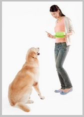 Use command to stop golden retriever barking