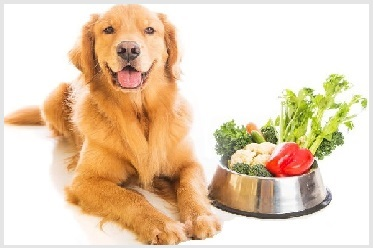 Best Dog Food For Golden Retriever