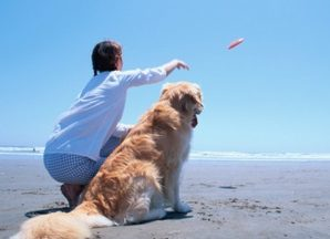 Dog Breed Activities For Golden Retriever Dogs