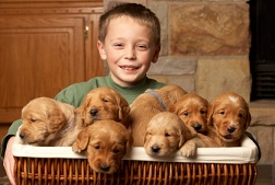 Find a Reputable Golden Retriever Breeder