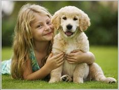 Golden Retriever Adoptions - puppies