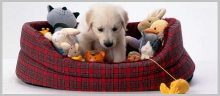 What to Look For in a Golden Retriever Bed