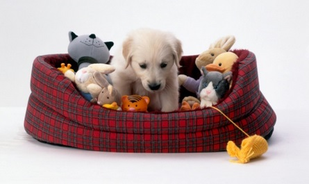 Best Bedding For Housebreaking A Dog