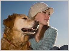 Golden Retriever Life Expectancy - Aging dog
