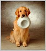 Golden Retriever Life Expectancy - best food