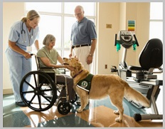 Golden Retriever Therapy Dogs Training