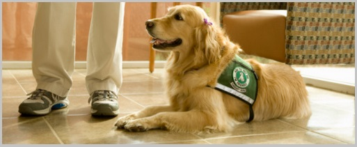 Golden Retriever Therapy Dogs - title