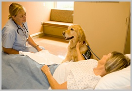 Golden Retriever Therapy Dogs - visit 2