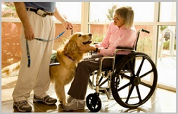 Golden Retriever Therapy Dogs - visit