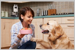 Golden Retriever Treats- 2