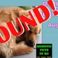 How to Cope with a Missing Golden Retriever