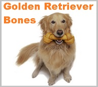 Golden retriever Bones