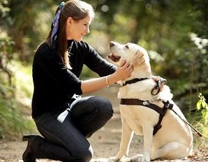 Guide Dogs For The Blind : Golden Retriever As The Favorite One