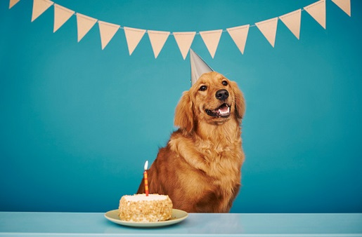 Image result for happy birthday golden retriever