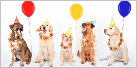 Happy Birthday Golden Retriever - 2