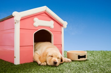 Housing a Golden Retriever Inside or Outdoors
