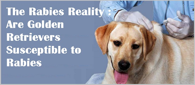 Rabies Reality - Golden retrievers - 1