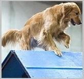 Start Dog Breed Activities for golden retriever