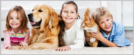 Where to Find a Free Adult Golden Retriever or Puppy-1