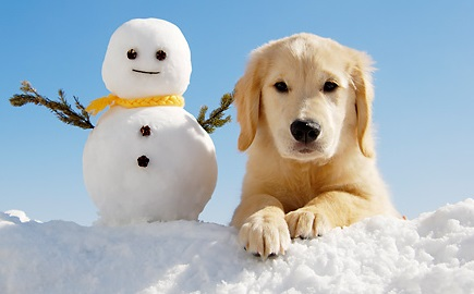Winter Golden Retriever Care Tips 2