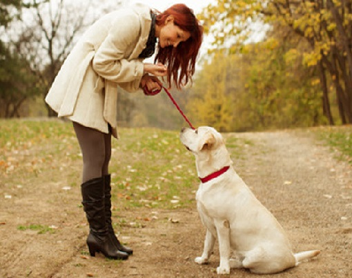 golden retriever behavior training