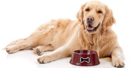 Golden Retriever Food 5