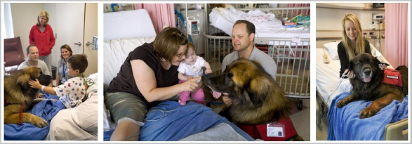 Animal Assisted Therapy - Benefits