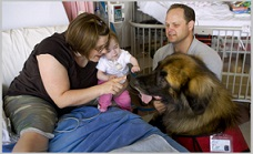 Benefits of Animal Assisted Therapy