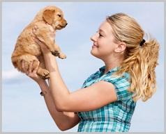 Choosing a Golden Retriever Puppy -