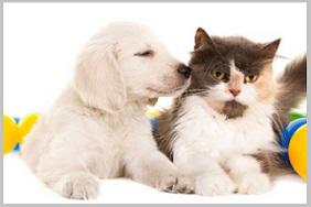Choosing a Golden Retriever Puppy -personnality