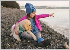 Golden Retriever Puppy Rescue 3