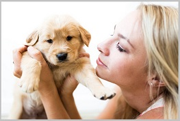 Golden Retriever Puppy Rescue 4