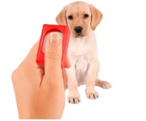 Golden Retriever Puppy Training With a Clicker