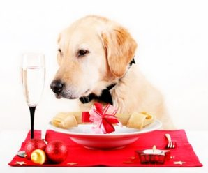 Dog Food Analysis For Golden Retriever Dogs