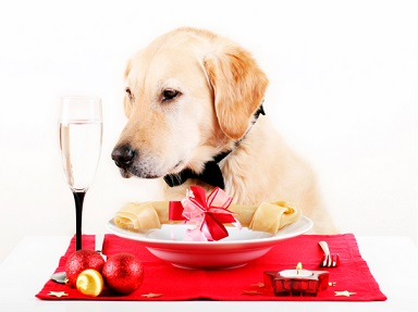 Dog Food Analysis For Golden Retriever Dogs-2