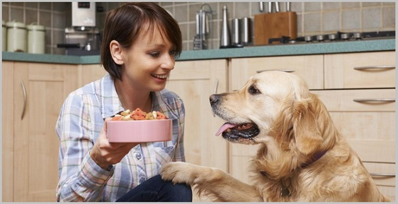 Best Dog Food For Dogs With Frequent Diarrhea