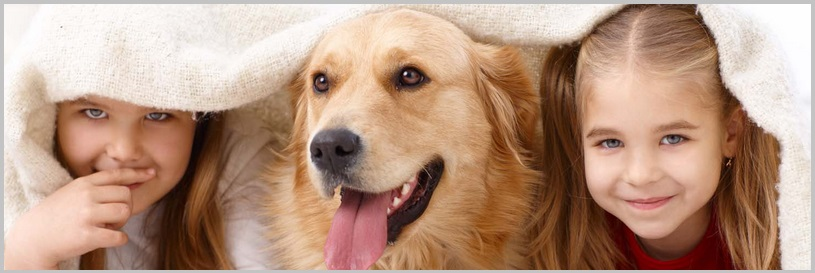 Obesity Diseases In Golden Retriever Dogs