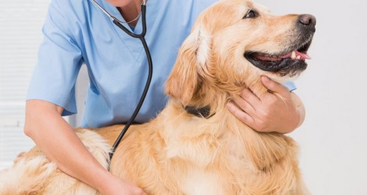 How Can I Help My Dog With Pancreatitis