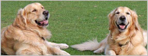 Easily Digestible Dog Food Pancreatitis