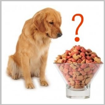 Special Diets For Dogs Include Pet Nutritional Supplements