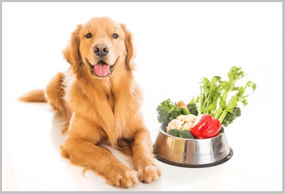 Special Diets For Golden Retriever Dogs