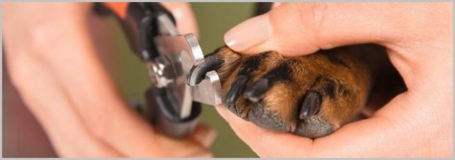 Cutting Dog Nails 1