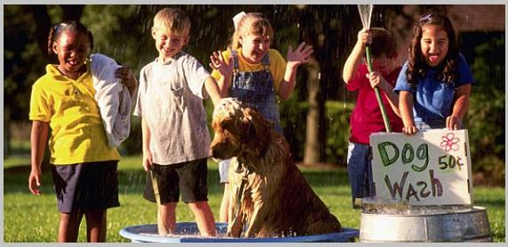 Dog Bathing Tips -Golden Retriever