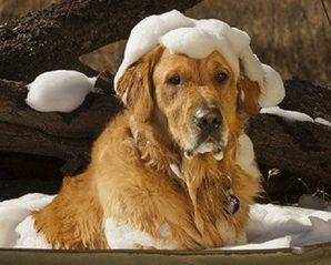 Dog Shampoo :Can You Wash A Dog With Regular Shampoo?