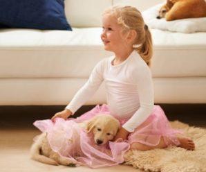 Golden Retriever Puppy Temperament