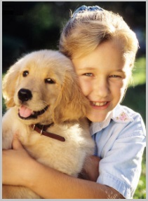 Golden Retriever Puppy Temperament calm