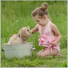 Golden Retriever Puppy Temperament touch